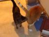 Smith kitties