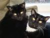Greene kitties